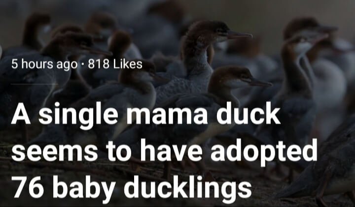 Where did they find this article of me and ducky fam